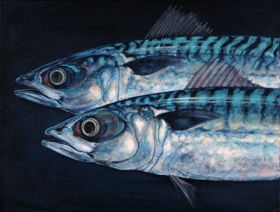 Cruising (Atlantic Mackerel)
